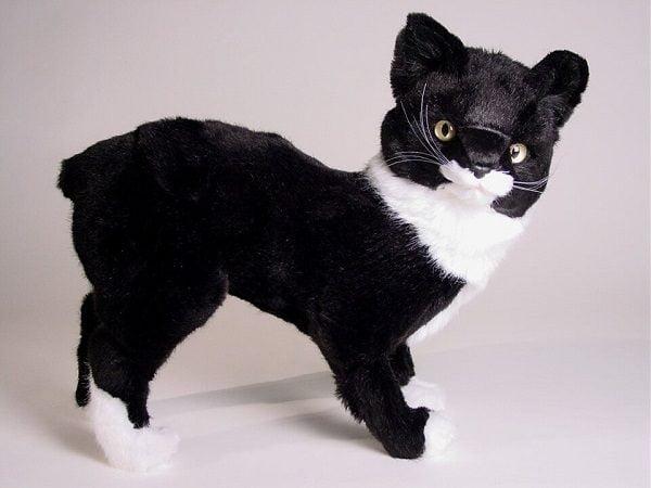 Mèo Manx Đuôi Cộc
