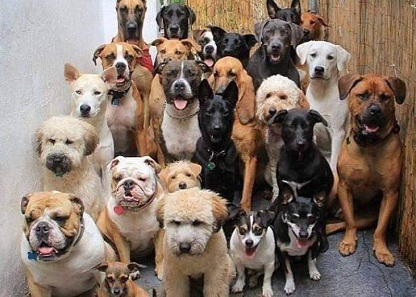 Chó Cảnh Giá Rẻ Dưới 1 Triệu