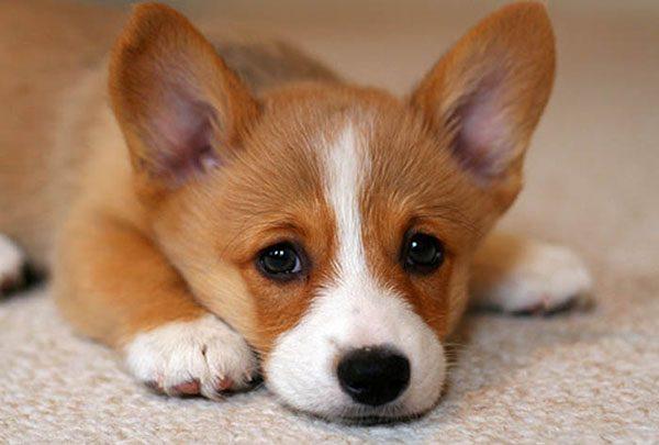 Chó Bỏ Ăn