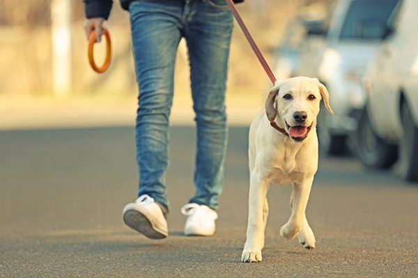 Dẫn chó đi dạo