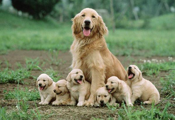 chăm sóc chó đẻ