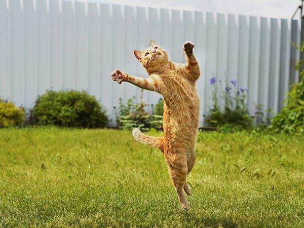 Vệ Sinh Sạch Sẽ Môi Trường Sống Của Mèo