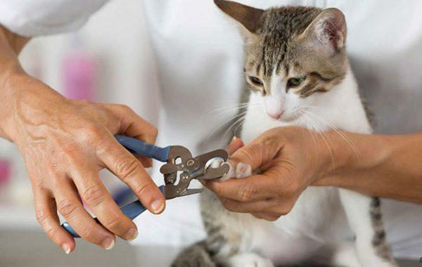 Cắt móng chân cho chó mèo