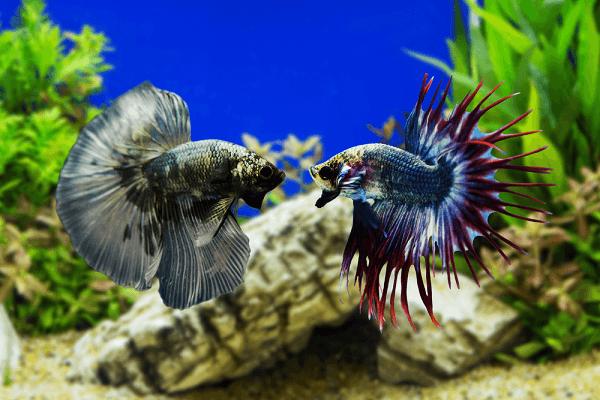 Cá Thuỷ Sinh