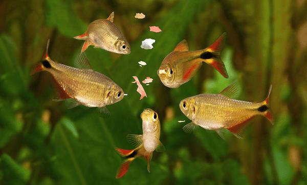 Thức ăn cho cá cảnh