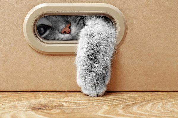 Hộp Carton Cho Mèo
