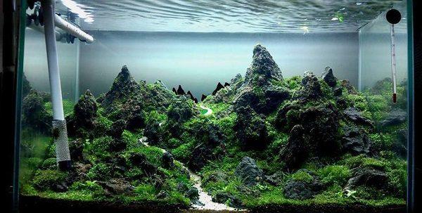 cây sưởi hồ cá