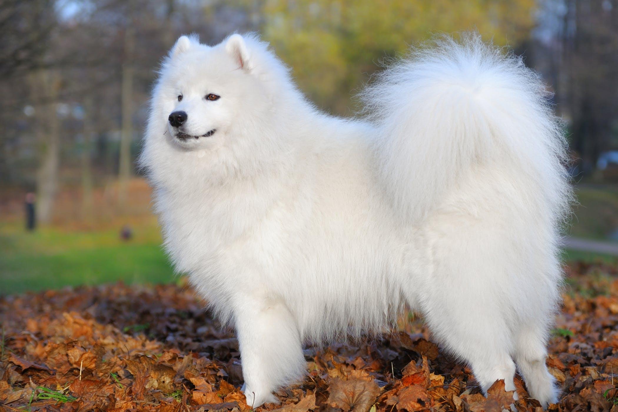 Chú chó khôn sẽ giữ cho bộ lông của mình luôn sạch sẽ
