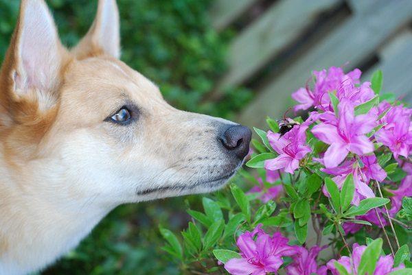Chó Bị Ong Đốt