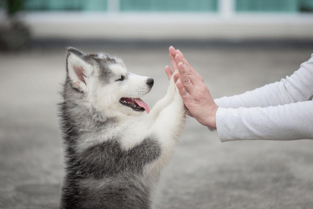 Cách Chọn Chó Khôn Trong Đàn