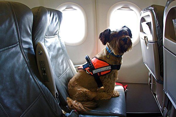 Du lịch Đà Lạt mang theo thú cưng cần lưu ý những gì?