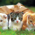 các lưu ý khi nuôi mèo cho sen