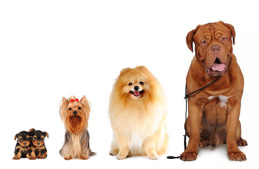 Chọn mua giường chó phù hợp với kích cỡ