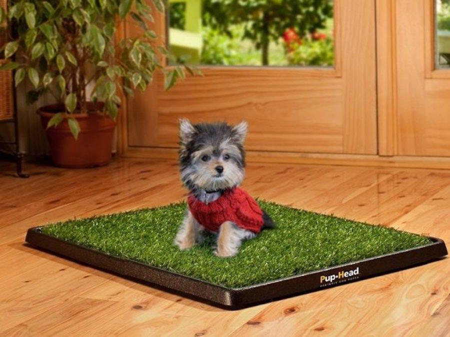 Khay vệ sinh cỏ nhân tạo cho chó